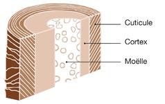 cheveux structure